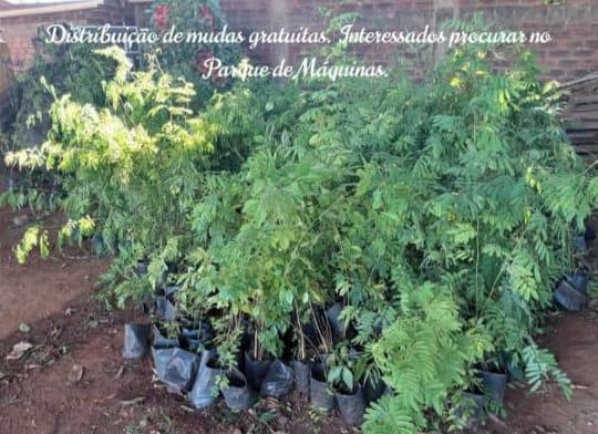 Aviso da Sec. Mun. do Meio Ambiente: Distribuição gratuita de mudas.