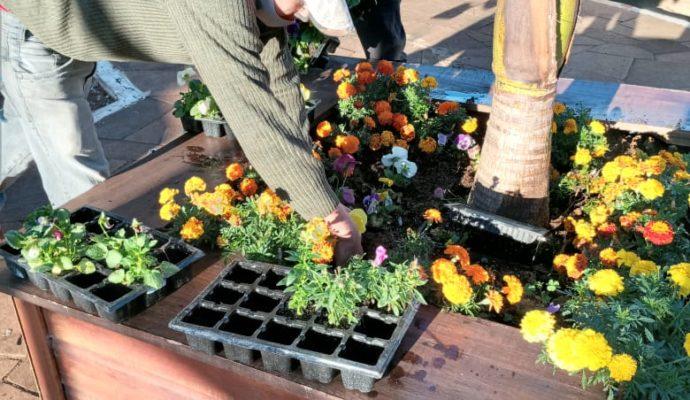 Mudas de flores são plantadas nos canteiros da Avenida 20 de Março.
